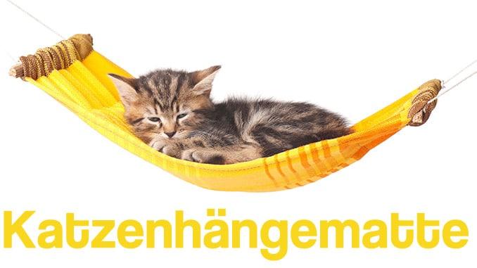 Bilder einer Katze in einer gelben Hängematte